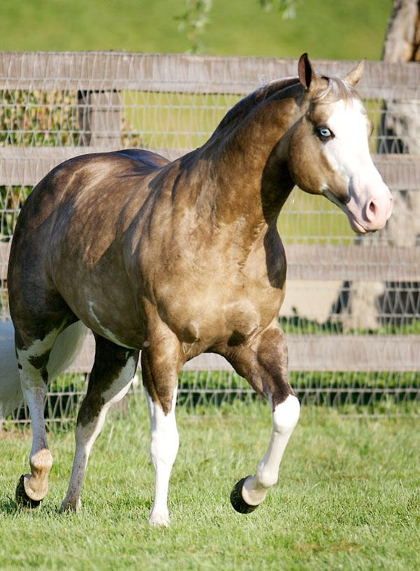 Big Chex To Cash       (Nu Chex to Cash x Snip O Gun)      Silver Spurs Equine