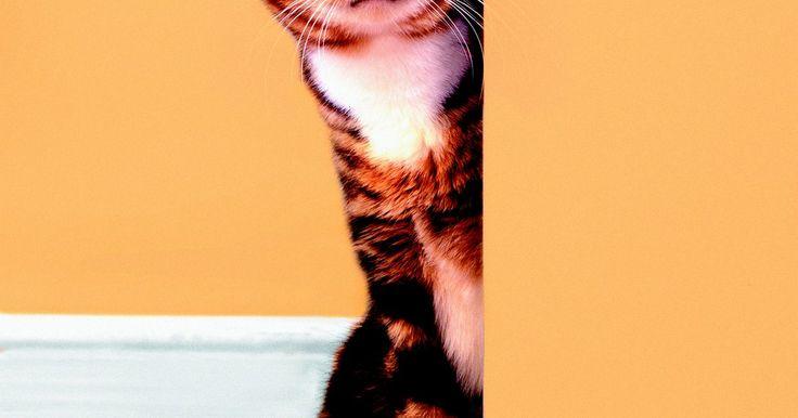 Como usar vinagre branco para eliminar o cheiro de urina de gato nas paredes. Quando gatos urinam nas paredes, o xixi pode pingar no piso e carpete, deixando todo o ambiente com um cheiro ruim. Se você sentir o odor ou notar uma mancha de urina na parede, é necessário limpar imediatamente para impedir que o cheiro persista. Para remover o odor de urina com eficiência, você também precisa remover a mancha da parede. O ...