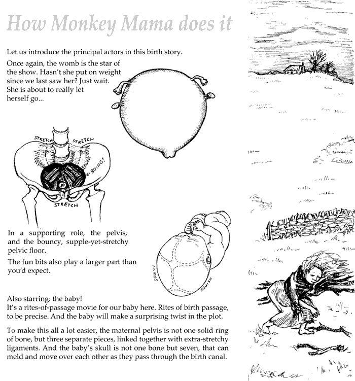 monkey-m-01.gif (700×751)