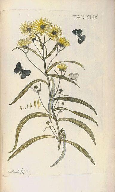 Afbeeldingen van zeldzaame gewassen. Te Leyden : By Johannes le Mair, 1775..