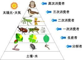 生物 構造 ピラミッド 土壌 - Google 検索