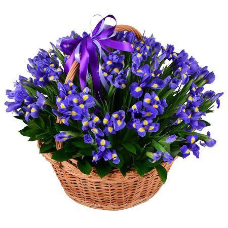 101 blue irises