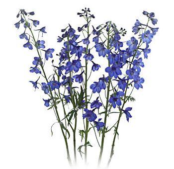 Delphinium Flowers   Bulk Delphinium Flowers at Wholesale Prices