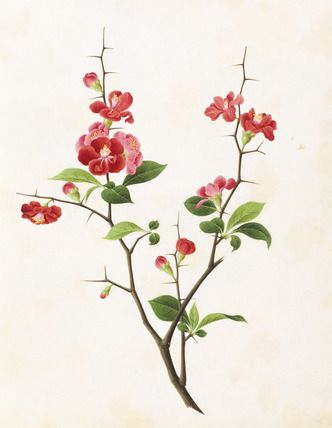 chinese flower print from the V&A collection