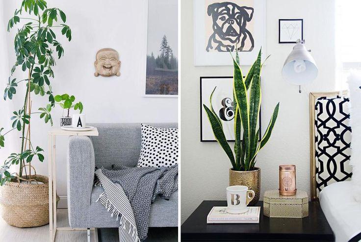 chambre de culture cannabis interieur mystical. Black Bedroom Furniture Sets. Home Design Ideas