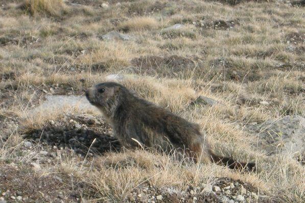 E' anche il momento delle marmotte (Foto Brevini)