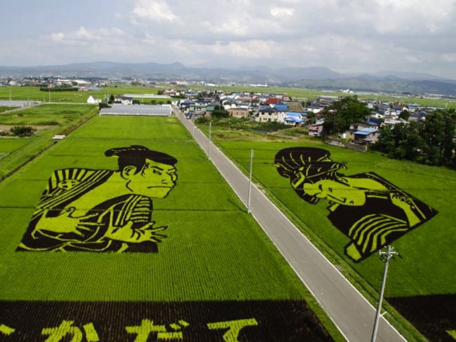 Hidden world discovered under Japanese rice paddy!
