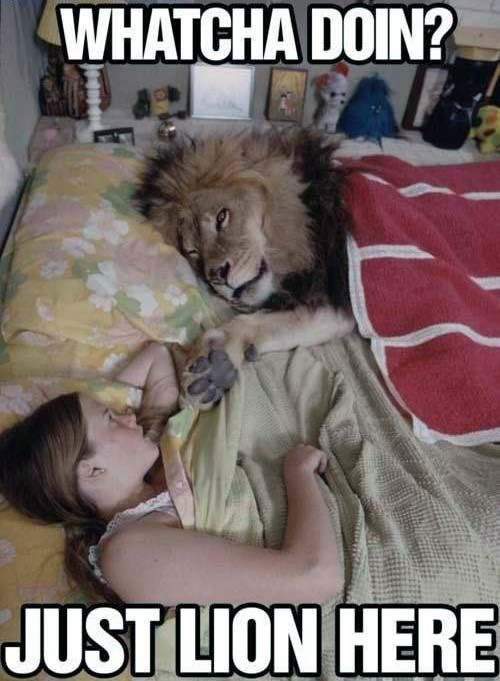 King Of The Jungle Bed Buddy