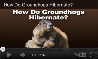 Groundhog Day videos paired with classroom activities.