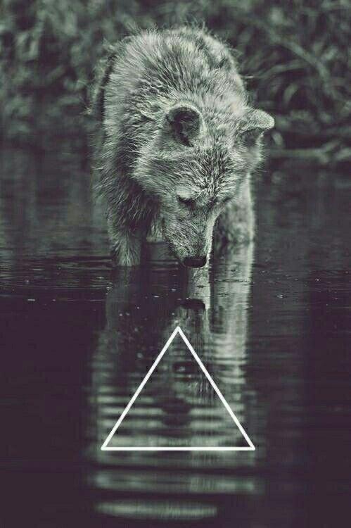 Wer Wölfe mag kann sich freuen hier ist ein sehr süßes Bild