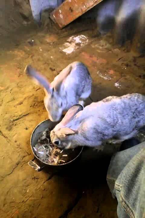 Яма для кроликов 15