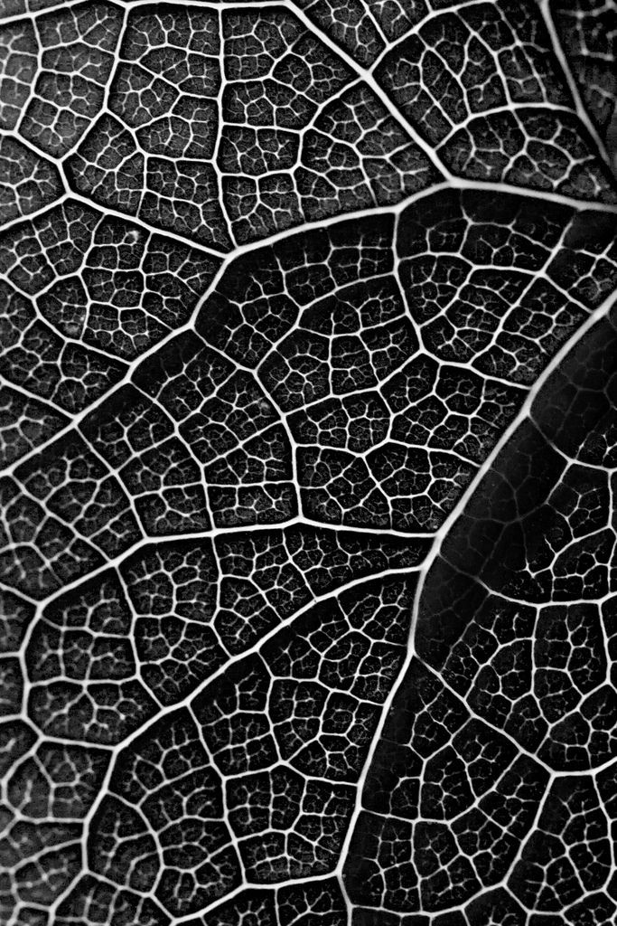 Leaf Pattern B W Texture Photography Patterns In Nature