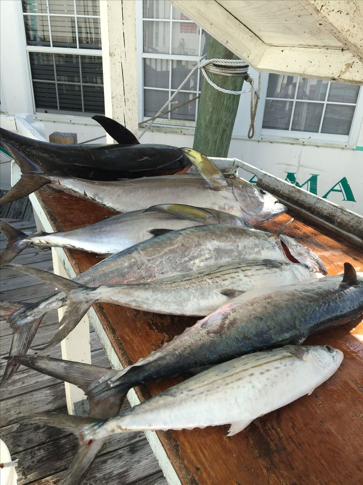 161 best tuna time images on pinterest blackfin tuna for Best fishing time today