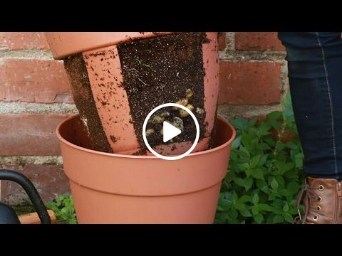 En coupant un pot à fleurs en plastique, elle réalise une astuce de jardinage carrément géniale! - Trucs et Astuces - Trucs et Bricolages