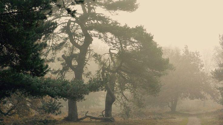 Mist-in-het-mensingebos-in-Roden-foto-Harry-van-der-Weijden.jpg (770×433)