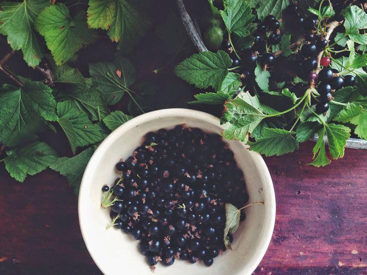 Rose Geranium Meringues with blackcurrants and cream