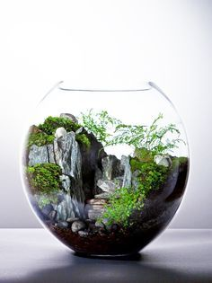 1000 ideen zu h ngendes terrarium auf pinterest terrarium h ngendes terrarium und. Black Bedroom Furniture Sets. Home Design Ideas