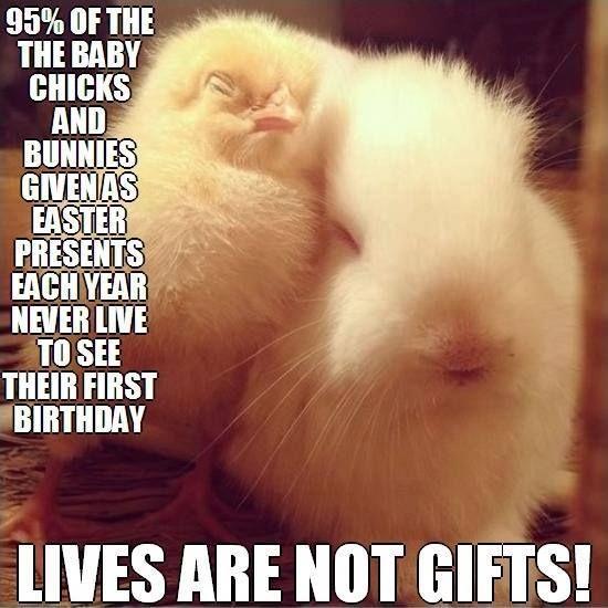 Happy easter bunnies - 2 part 8