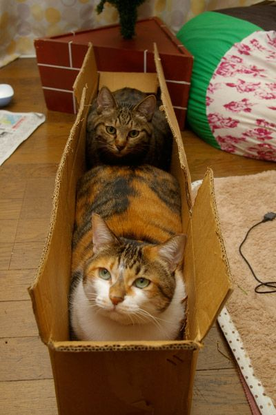 1000 Ideas About Cat Traps On Pinterest Silly Cats