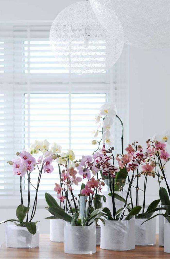 Les 25 Meilleures Id Es De La Cat Gorie Orchid Es Blanches Sur Pinterest Pi Ce Ma Tresse D