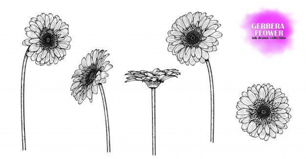 Flores De Gerbera Desenhada De Mao In 2020 Gerbera Daisy Tattoo Daisy Drawing Gerbera