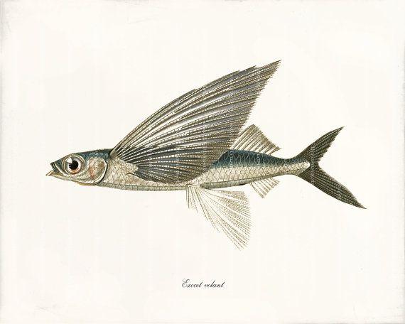 Fish Art Print - 8 x 10 - Flying Fish