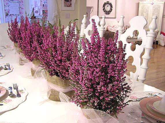 Potted Heather Centerpiece: heather, yes. Pink tulle, no. Can I get potted heather in January?