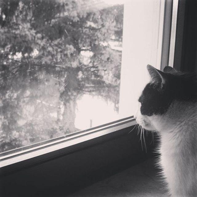 Erinnerungen: Nie wieder tierische Rotznasen am Fenster  #tot #katze #memory #erinnerung #wohnen #wohnenindeutschland #fenster #trauer #trauern