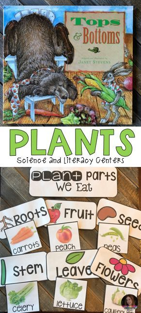 Plants is perfect for your spring themes. This unit is based around essential questions with vocabulary cards with real pictures, anchor charts to reinforce concepts, labels for sorting, observations, science experiments and fun hands on craftivities that students will love! I have even included a sample lesson plan to demonstrate how to implement the activities. You will find everything you need for a complete plant unit!