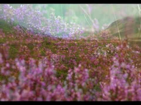 ♫ Scottish Music - Wild Mountain Thyme ♫ - YouTube