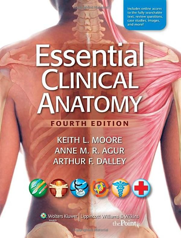 Essential Clinical Anatomy International Edition By Keith L Moore