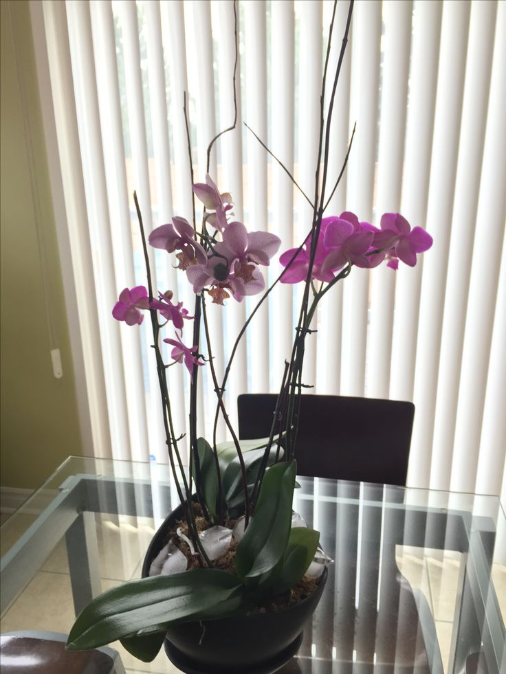 Orchid arrangement - materials and plants from Ikea