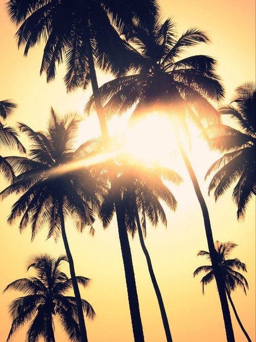 to be lying under these palms sipping on a coconut drink...ahh that would be the life for me!