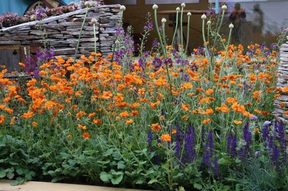 Orange Geum Blue Salvia Plant Combos 2 Pinterest Gardens And Plants