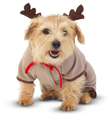 How cute is this Reindeer Onesie For Dogs from puddypooch.co.uk! Check out more great gifts for pets this xmas here: http://bit.ly/1U6Qhmn