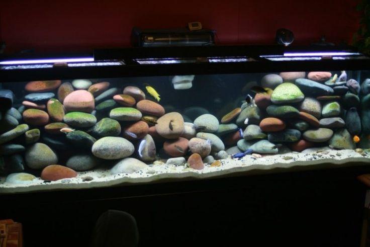 Aquarium Einrichtungsbeispiele Dekorative Steine