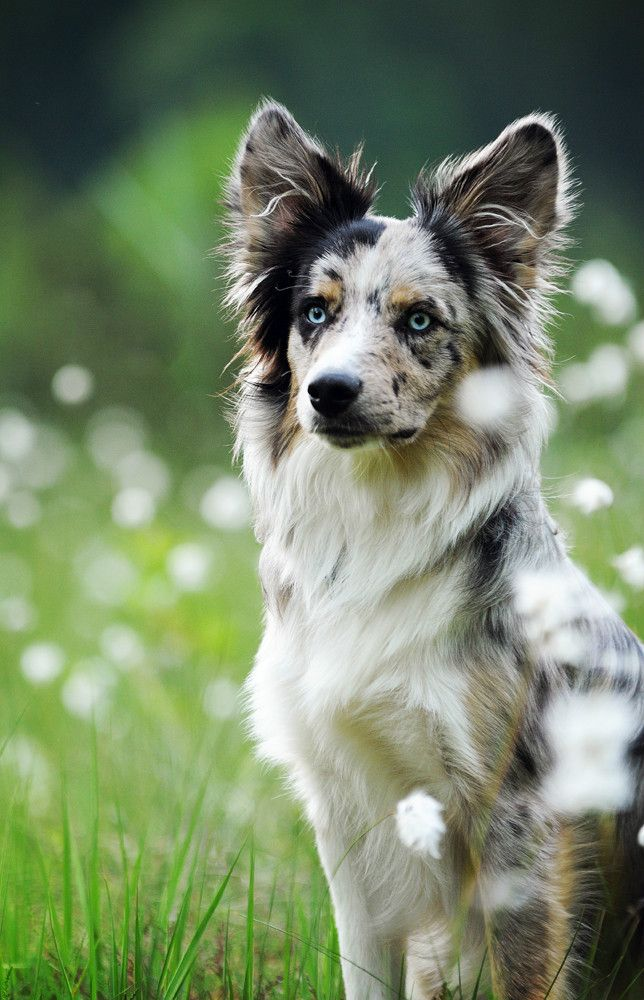 Storm- border collie she-dog with beautiful markings and intense icy blue eyes. Quick and clever, but stubborn and impulsive. Often gets into a lot of trouble. Lives on the streets. Sisters with Willow