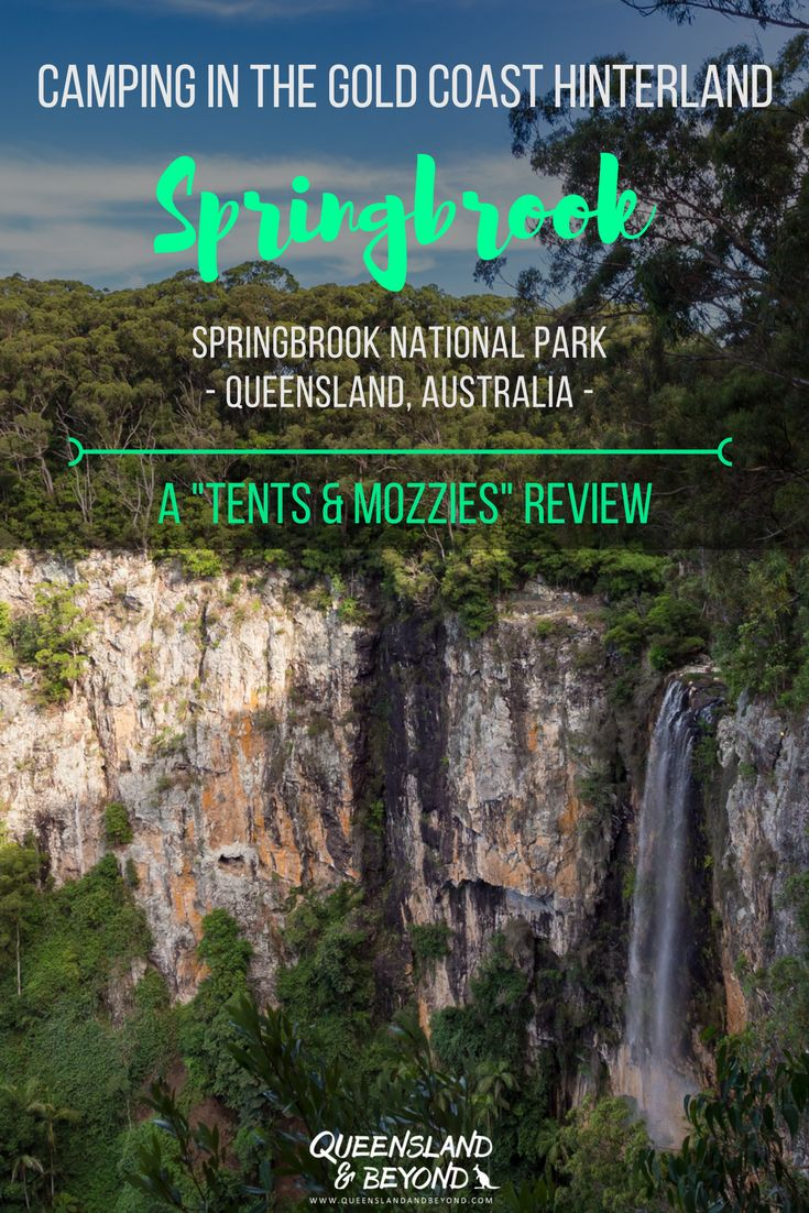 """The Gold Coast Hinterland boasts a number of spectacular national parks. Springbrook National Park offers some gorgeous hiking trails and an easily accessible campground. Here's my """"tents & mozzies"""" review of camping at the Settlement camping area at Springbrook. 🌐 Queensland & Beyond #springbrook #queensland #camping #australia #nationalpark"""