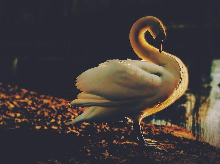 Belvoir Wildlife With Wings: Daren Lee's photo