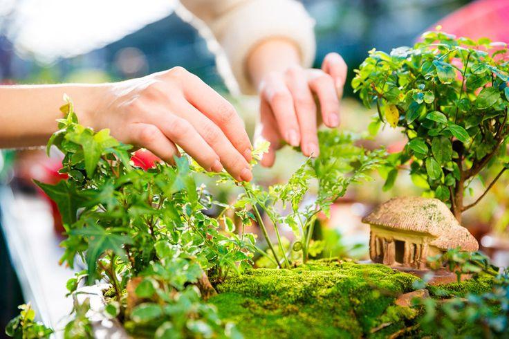 15 söta miniträdgårdar + så gör du en egen