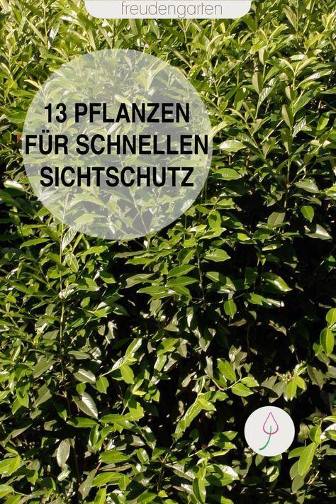 schnell wachsende pflanzen gardening sichtschutz. Black Bedroom Furniture Sets. Home Design Ideas