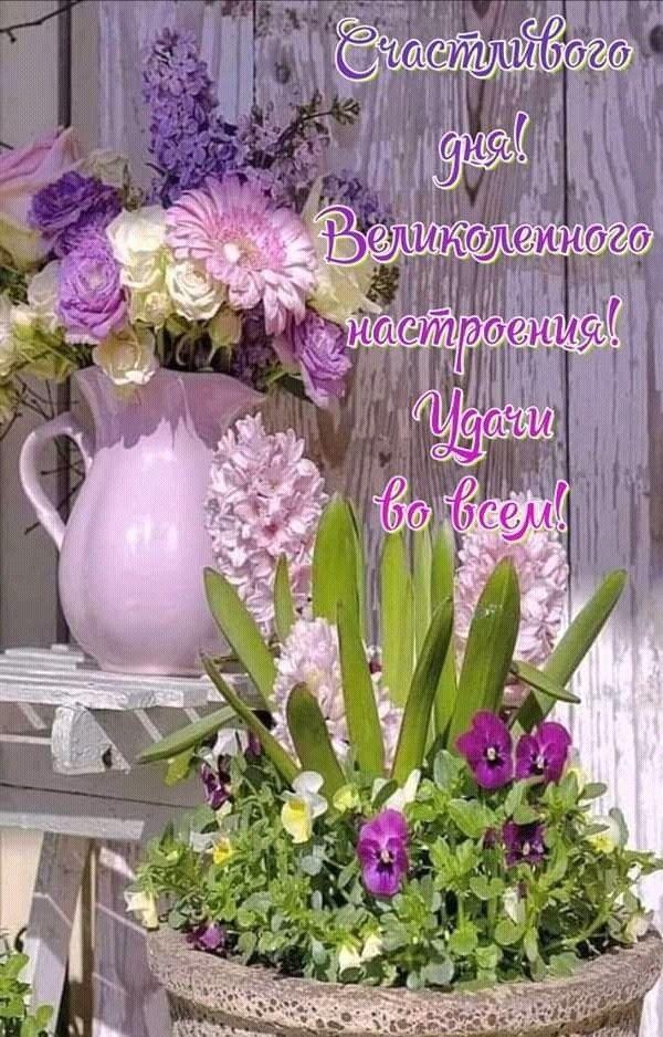 Добрый день | Летние цветы, Доброе утро, Открытки