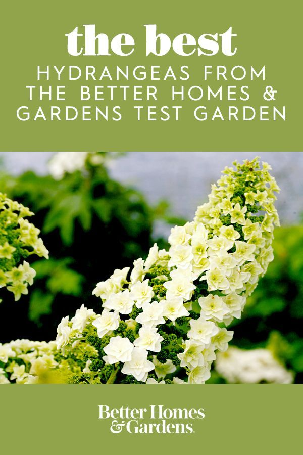 98e245e53ab3fbe7c214dd0157003747 - Better Homes And Gardens Plants For Sale