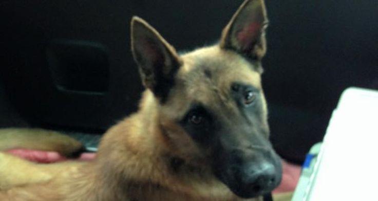 Hunde-Blog von Stefanie Gaugl: Tierschutz der etwas anderen Art - weekend.at