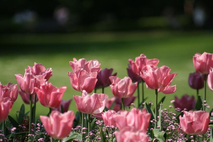 Flowers, Jardin du Luxembourg, Paris, France. Original.