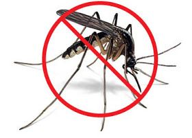 Herbal Health Care: 10 ways How to Prevent Mosquitoes This Summer