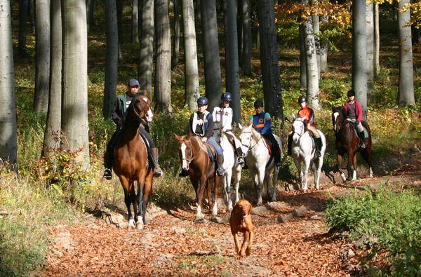 Lovaglás és kutyasétáltatás az erdőben  Békében az erdőkben  #kutya #ló #erdő #lovaglás #kutyabaráthelyek #kutyabarathelyek #dog #horse