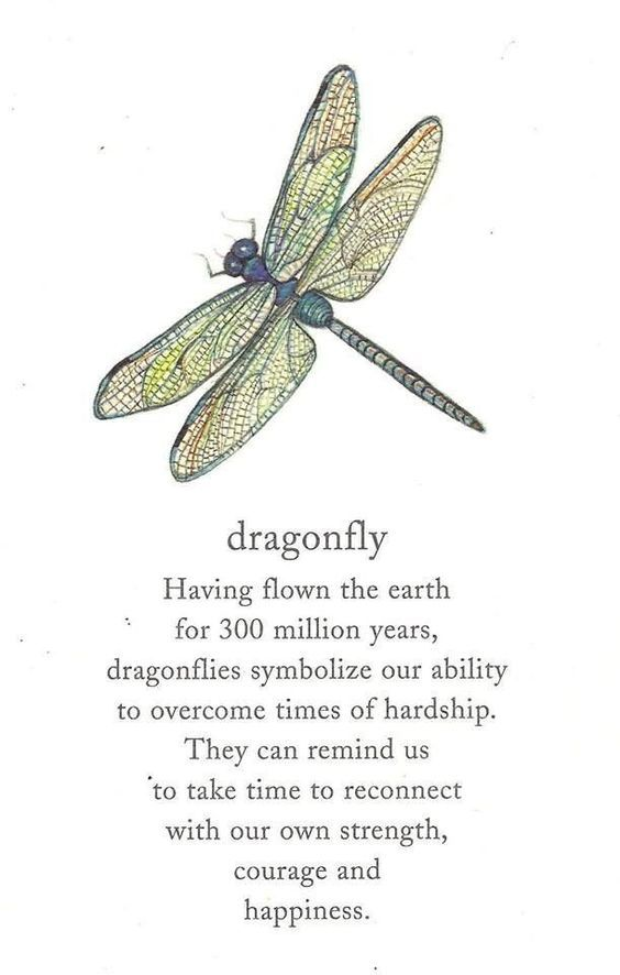 Your Animal Spirit Guide for August 26th is The Dragonfly – Witches Of The Craft®