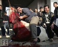 Stop the cruel and inhumane killing of animals for Halal/Kosher meat.