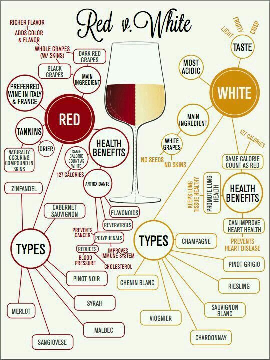 Red vs White wine anatomy. How they differ.